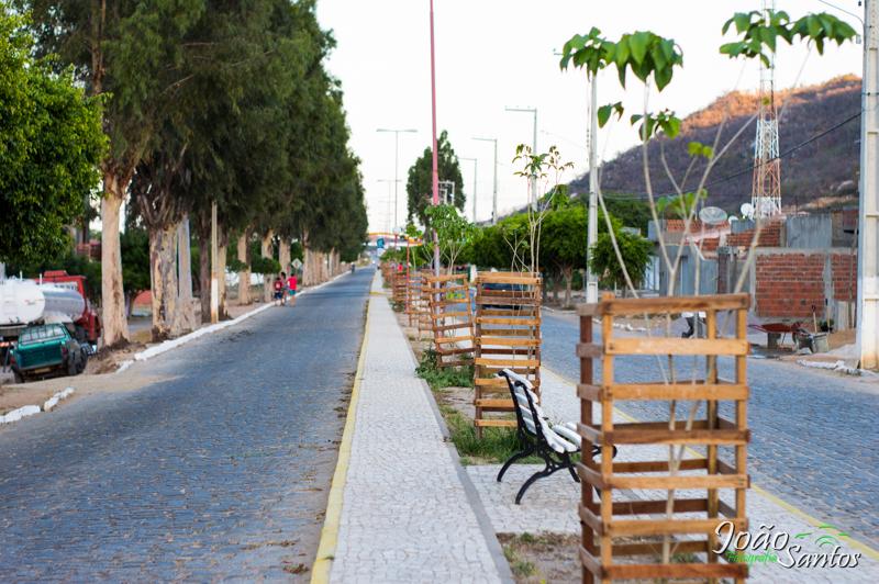 Plantação de novas mudas de árvores no canteiro central – Foto: João Santos