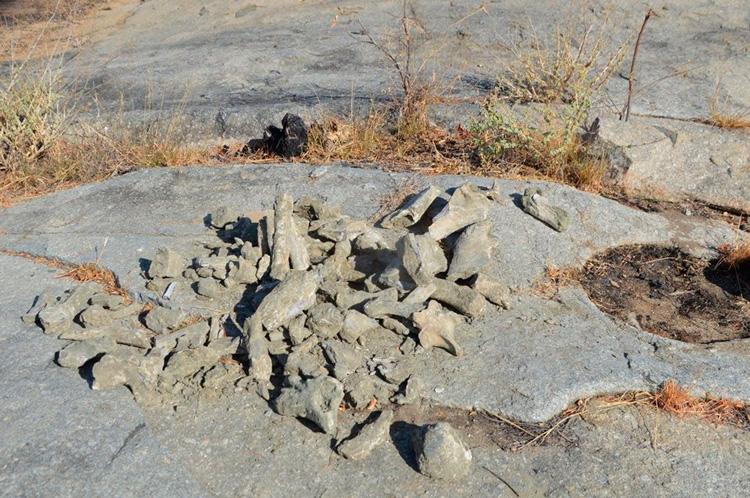 Os fósseis foram encontrados em uma escavação de aproximadamente 5 metros de profundidade