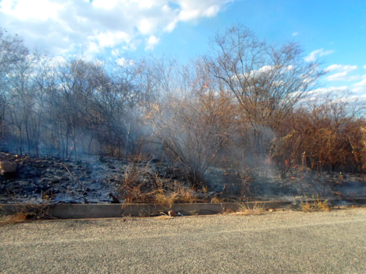 Com o vento o fogo se alastrava muito rápido - Foto: Reprodução