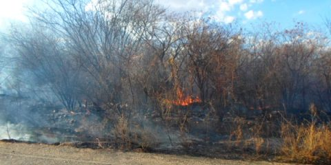 Incêndio atinge vegetação às margens da PE-309 em Solidão