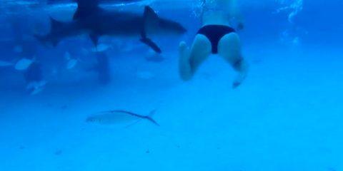 Marido filma esposa sendo atacada por tubarão durante lua de mel