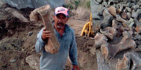Fóssil de outro suposto pré-histórico é encontrado em Itapetim