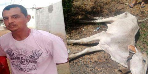 Homem morre após colidir com animal na PE-320 em Tabira
