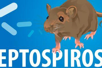 Leptospirose tem alta de 27,2% em Pernambuco
