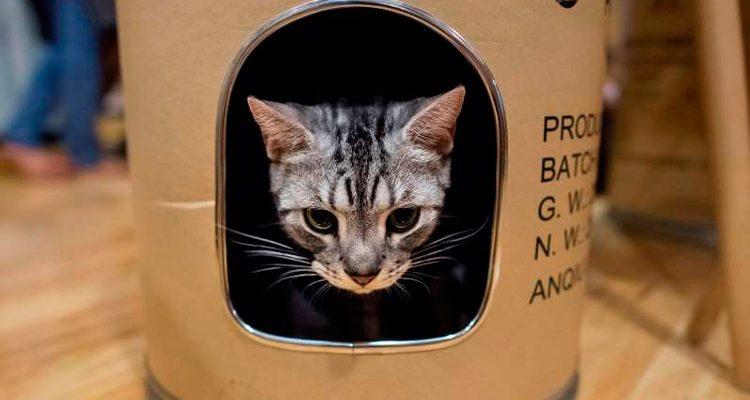 Gato disputado por ex-casal terá guarda compartilhada