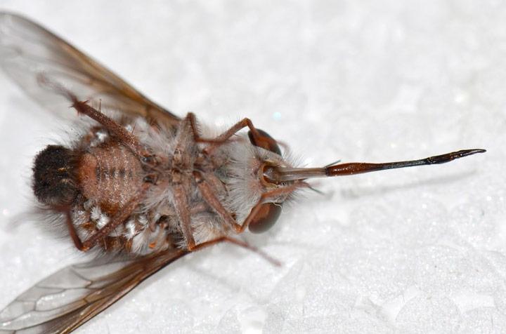 """""""Esta mosca tem uma série de similaridades com o personagem""""- Foto de 'Jean e Fred'"""
