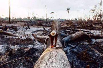 Por que os incêndios da Amazônia geraram uma crise no Brasil e no mundo?