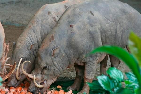 Conheça 9 animais com dentes muito medonhos