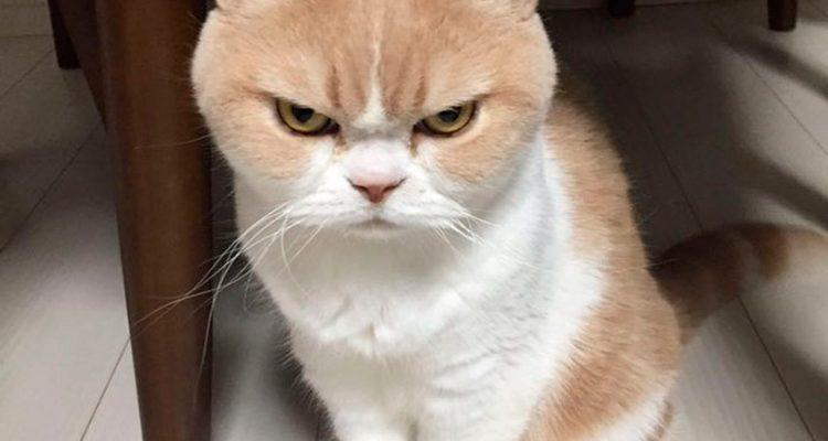 4 coisas que o seu gato detesta e você precisa saber agora mesmo
