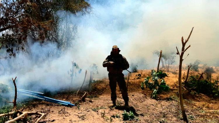 Plantações poderiam produzir cerca de 10 toneladas de maconha. (Foto: Divulgação/PRF.)