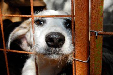 Senado deve votar projeto que proíbe sacrifício de animais de rua
