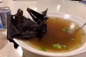 Coronavírus: sopa de morcego pode ter espalhado a doença