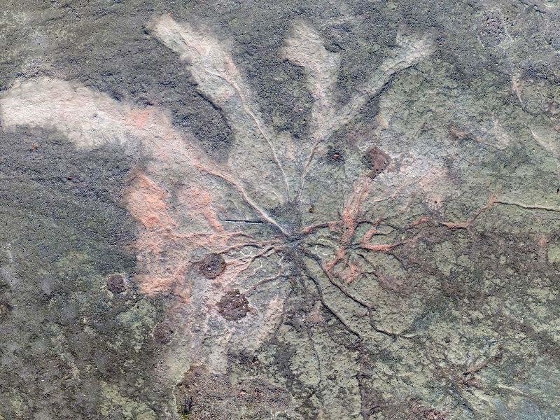 Floresta mais antiga do mundo é descoberta