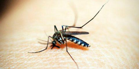 Governo alerta surto de Dengue em todo o Nordeste