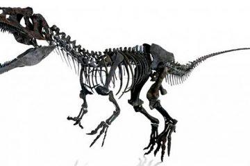 Câncer raro em humanos é encontrado em fóssil de dinossauro