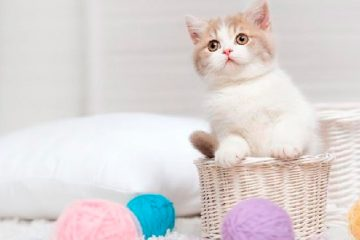 Preferência de brasileiros por gatos é 5% maior do que a média mundial