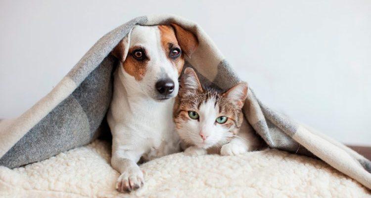 Cachorros e gatos pegam coronavírus?