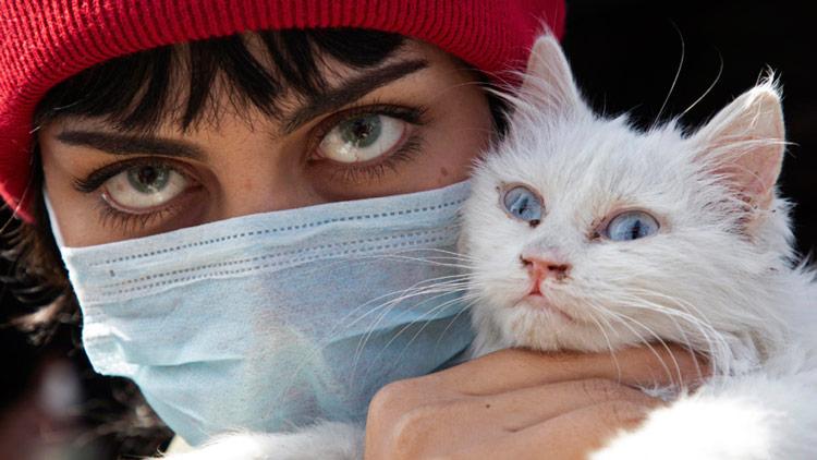 Gato é diagnosticado com coronavírus, mas não se preocupe