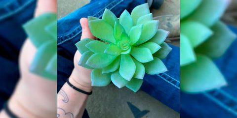Jovem descobre que regava planta de plástico há 2 anos