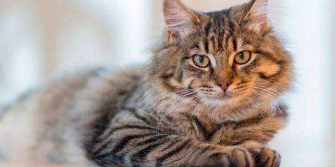 Covid-19: como acontece a infecção em animais?