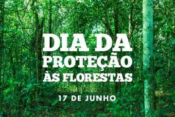 17 de julho - Dia de Proteção às Florestas