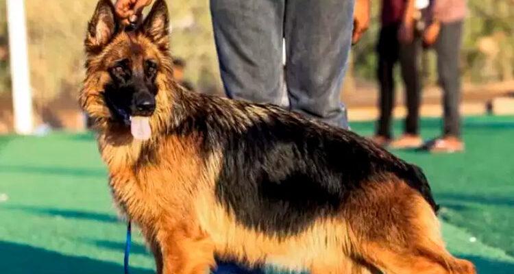 Morre o primeiro cão que testou positivo para coronavírus nos EUA