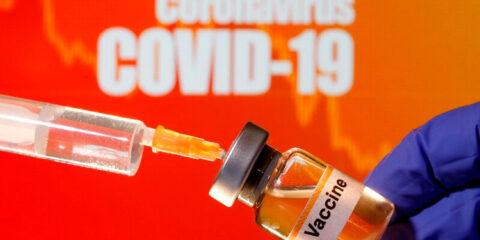 Vacina contra covid-19 testada em macacos apresenta resultados animadores