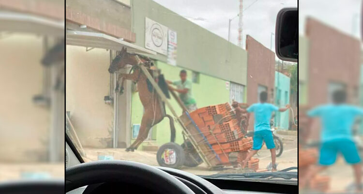 Burro fica suspenso em carroça com excesso de peso em Juazeiro do Norte