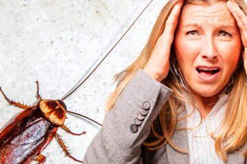 10 coisas que você talvez não saiba sobre as baratas
