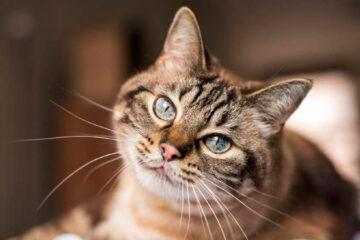 Doença infecciosa transmitida por gatos é confirmada em Manaus