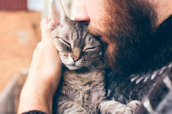 Gatos dão 'cabeçadas' como demonstração de amor