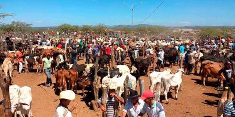 Em Tabira - PE feira do gado é cancelada e Feira livre é restrita apenas aos tabirenses