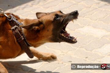 Cachorro ataca pessoas em Solidão-PE
